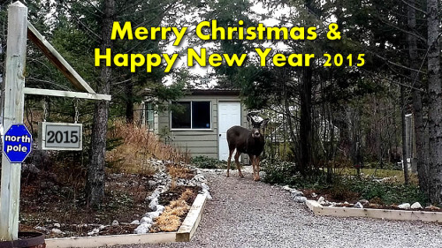 calgary merry-christmas flatfee495